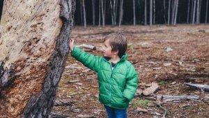 Holz als Werkstoff für Spielgeräte
